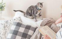 Kocie ścieżki, czyli 5 książek z motywem kota