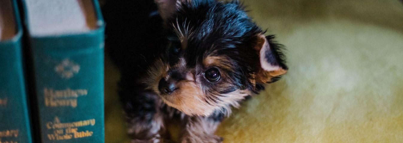 Pieskie życie, czyli 5 książek z motywem psa
